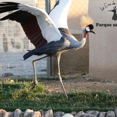 La Ministra María Reyes Maroto Illera visitará La Era de las Aves de Fresno el Viejo