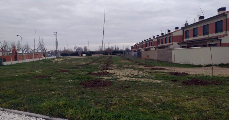 El Ayuntamiento de Fresno el Viejo planta 300 chopos canadienses en el pueblo